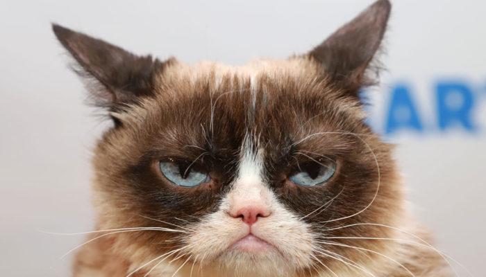 Internet Sensation Grumpy Cat Dies At Age 7