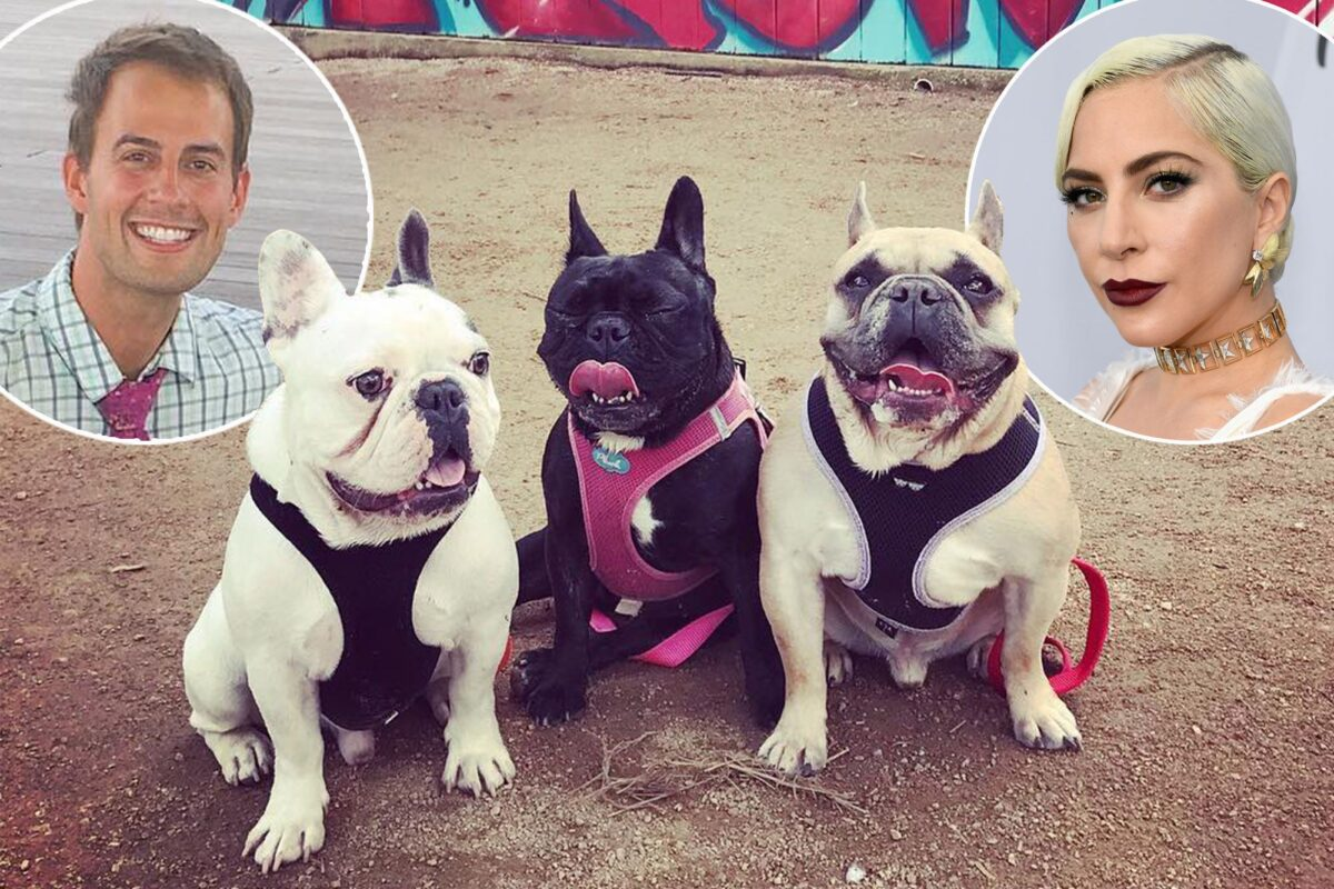 Lady Gaga Dognappers Arrested for Robbery and Attempted Murder